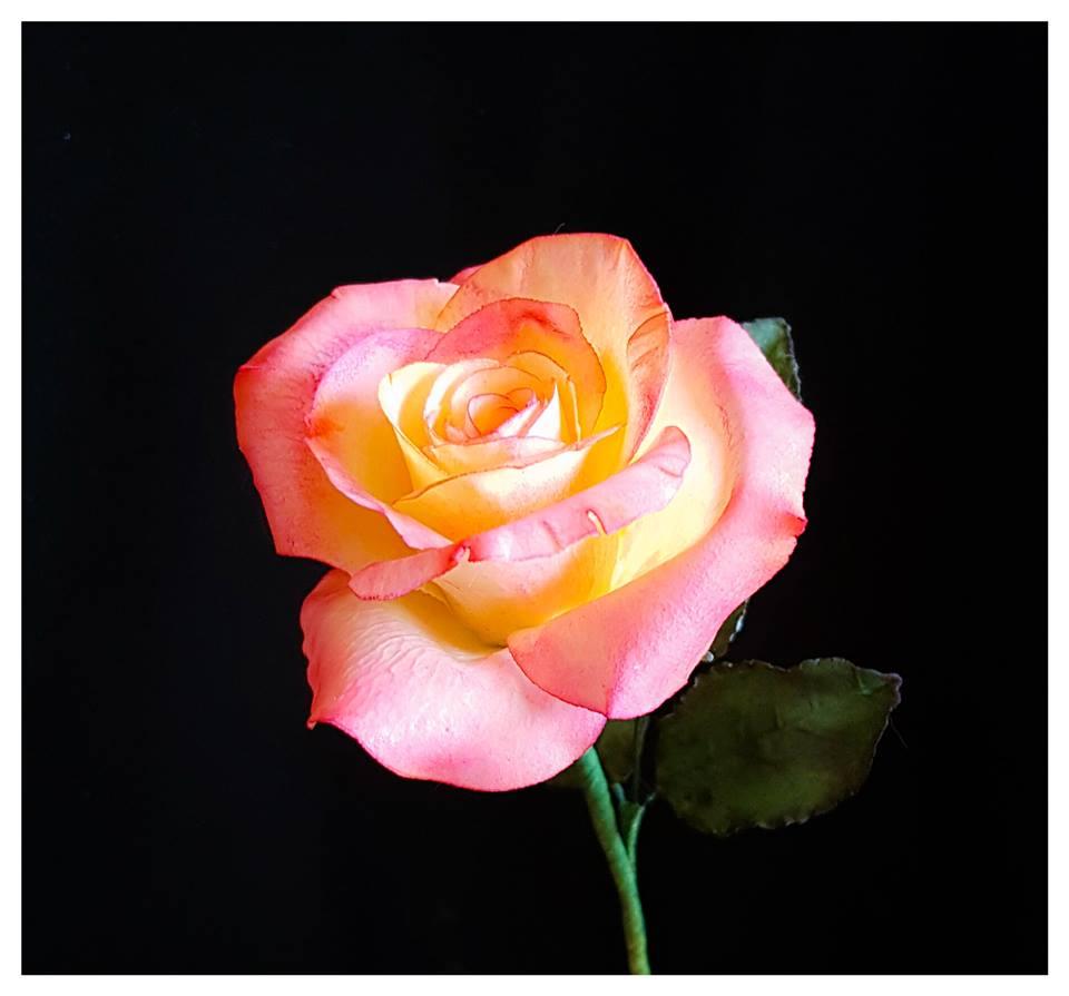 rose & yellow1